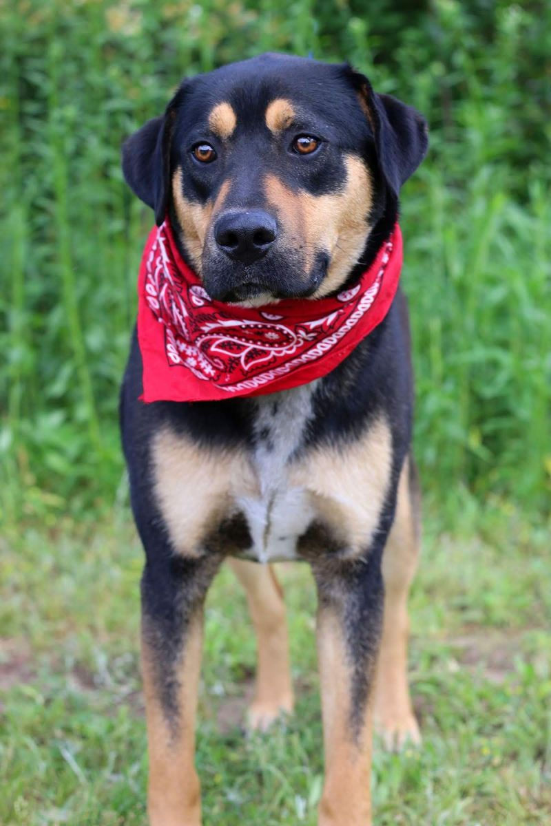 44743277 4 Jpg Peach County Animal Rescue And Rehabilitation