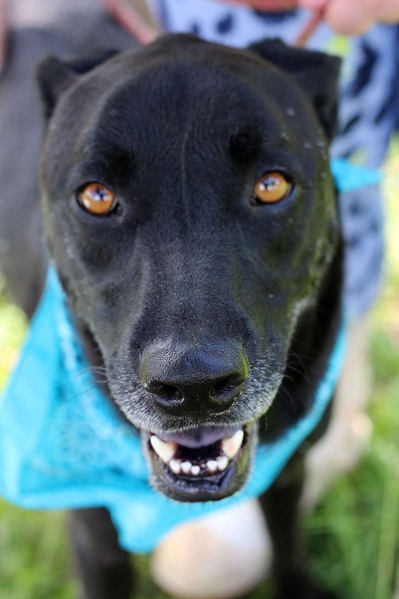 46207230 5 Jpg Peach County Animal Rescue And Rehabilitation
